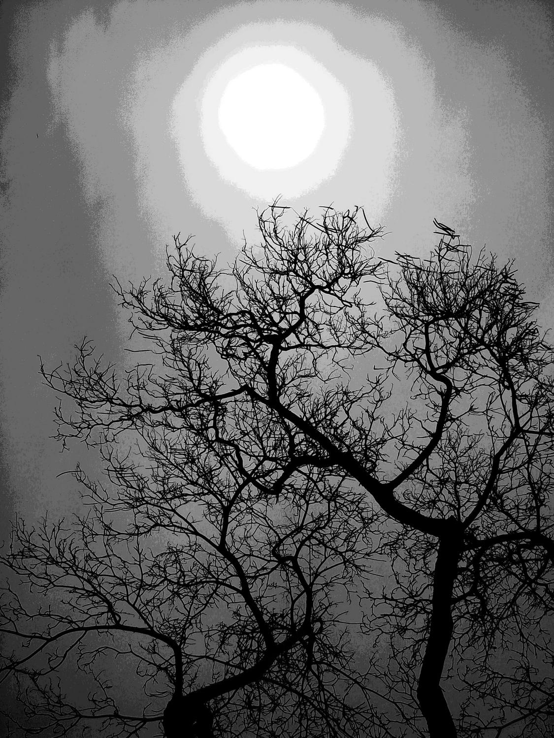 moon rising bare tree in the foreground black and white - Desolation - Techno-Impressionist Museum - Techno-Impressionism - art - beautiful - photo photography picture - by Tony Karp