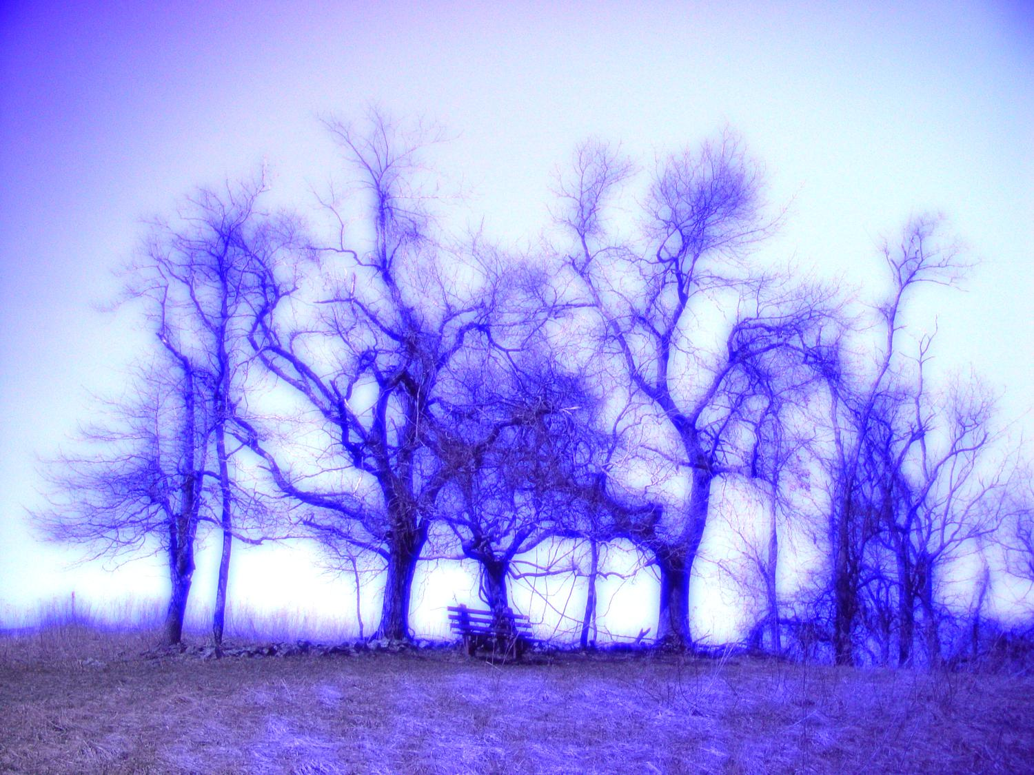 trees, Sky Meadows, by Tony Karp - Dancing Trees - Techno-Impressionist Museum - Techno-Impressionism - art - beautiful - photo photography picture - by Tony Karp