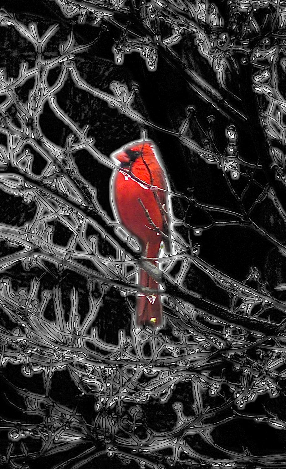 - <center>Cardinal in an icy tree - Techno-Impressionist Museum - Techno-Impressionism - art - beautiful - photo photography picture - by Tony Karp