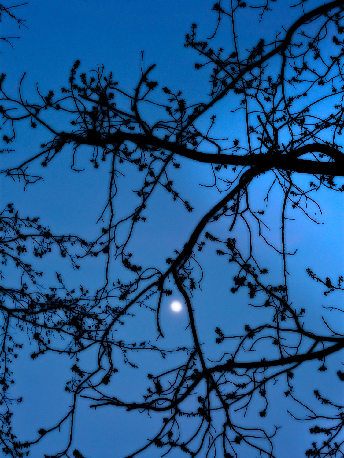 - Moon in the tree</Center><p></p> - Techno-Impressionist Museum - Techno-Impressionism - art - beautiful - photo photography picture - by Tony Karp