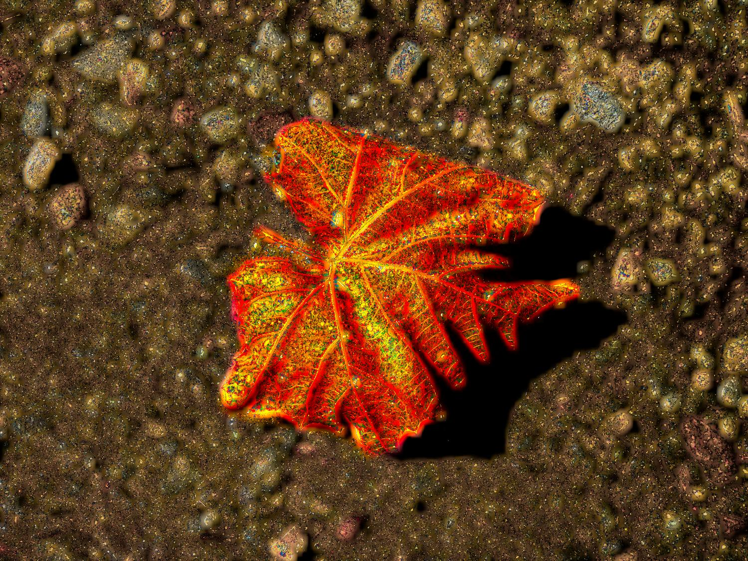 stylized brown leaf on the gravel road - <center>Magical leaf on a dirt road - Techno-Impressionist Museum - Techno-Impressionism - art - beautiful - photo photography picture - by Tony Karp